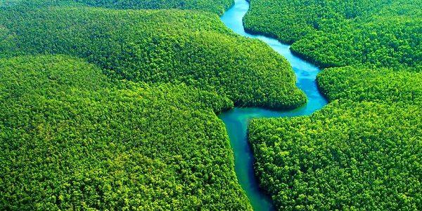 Thuyết minh về vai trò của rừng với cuộc sống